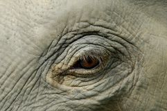 Elephant´s eye close-up Royalty Free Stock Photos