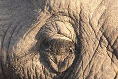 Elephant's eye in Sabi Sands Stock Photography