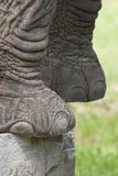 Elephant's feet. Detail of gray elephant's feet Stock Photography
