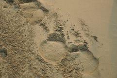 Elephant's footprint Stock Photos