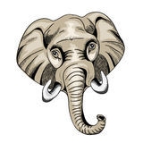 Elephant`s head. Detail of elephant`s head. Vector illustration opn white background stock illustration