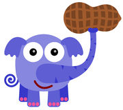 Elephant's peanut. A cartoon illustration of an elephant carrying a giant peanut stock illustration
