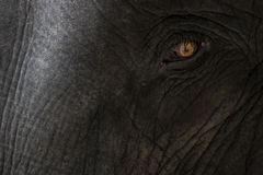 Elephant 's sad eye. Eye of a big elephant with detail of skin texture Royalty Free Stock Photo