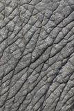 Elephant's skin. Detail of gray elephant's skin Royalty Free Stock Photography