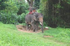 Elephant`s view of Thailand stock images