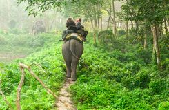 Elephant safari in chitwan forest Nepal Royalty Free Stock Image
