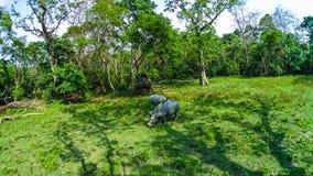 Elephant safari in Chitwan National Park, Nepal. The people at elephant safari in Chitwan National Park, Nepal stock photo