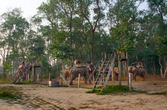 Elephant Safari in Chitwan , Nepal Stock Photography
