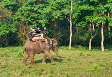 Elephant Safari in Chitwan , Nepal Stock Photo
