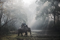 Elephant safari in Chitwan, Nepal Royalty Free Stock Image