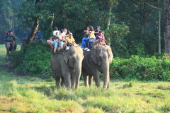 Elephant Safari in Chitwan. Royalty Free Stock Photography