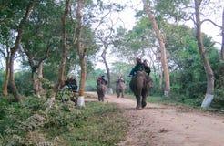Elephant Safari in Kaziranga. Elephants as seen giving Early morning Safaris royalty free stock photography