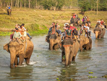 Elephant Safari in Nepal Royalty Free Stock Images