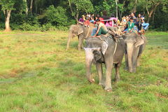Elephant Safari. Royalty Free Stock Photography