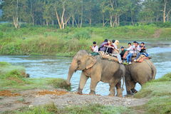 Elephant Safari. Royalty Free Stock Photography