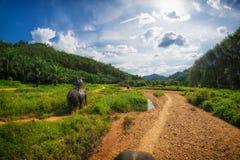 Elephant Safari in Thailand Royalty Free Stock Image