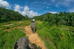 Elephant Safari in Thailand Royalty Free Stock Photos