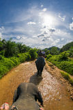 Elephant Safari in Thailand Stock Image