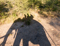 Elephant safari at Victoria Falls in Zambia Stock Photos