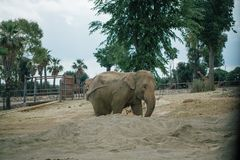 Elephant in Safari zoo Fasano apulia Italy stock image