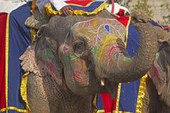 Elephant Salute Stock Photos