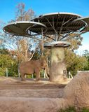Elephant in San Diego zoo. Stock Image