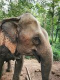 Elephant Sanctuary, Thailand, Chiang Mai Province. Elephant care Royalty Free Stock Photo