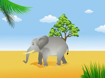 Elephant in the savanna Royalty Free Stock Photos