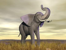 Elephant in the savannah Stock Photography