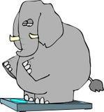 Elephant On Scales Royalty Free Stock Image