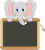 Elephant with school board Stock Photography