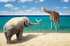 Elephant, seagull and giraffe at the beach Royalty Free Stock Photography