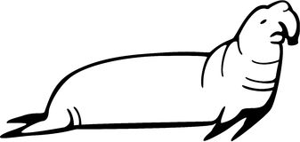 Elephant Seal Stock Image