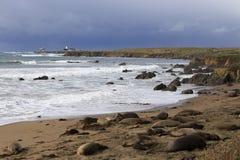 Elephant seals at the beach Royalty Free Stock Photo