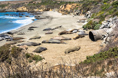 Elephant seals on the beach, San Simeon, California Stock Image