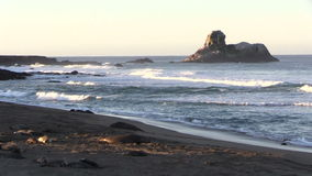Elephant Seals on the Beach Zoom In stock video