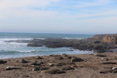 Elephant Seals on California Beach in Winter Royalty Free Stock Photography