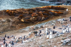 Elephant Seals and Penguins stock photos