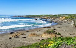 Elephant Seals and Seals napping royalty free stock photography