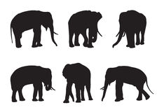 Elephant Set Silhouettes Stock Photos