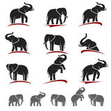 Elephant set. Vector Stock Photo