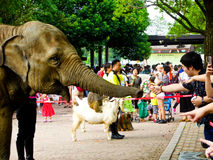 An elephant shaking hands with tourist Stock Photography