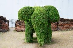 Elephant shape bush Royalty Free Stock Images