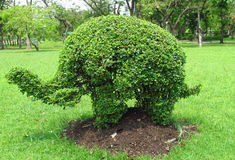 Elephant shape bush in the park Royalty Free Stock Photography