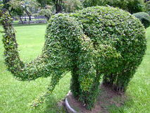 Elephant shaped bush. Royalty Free Stock Image