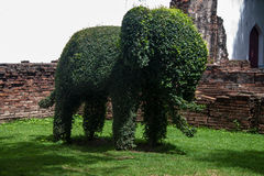 Elephant shaped bush Royalty Free Stock Photos