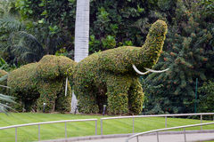 Elephant shaped topiary green trees in ornamental garden Royalty Free Stock Photos