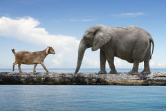Elephant and sheep walking over the single wooden bridge Royalty Free Stock Photos
