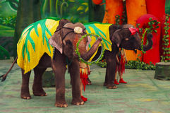 Elephant show. Elephants playing hula hoop with nose Royalty Free Stock Image