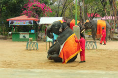 Elephant Show Stock Photo